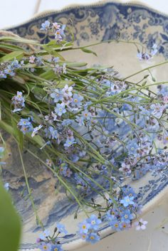 I haven't grown any of these little forget-me-nots in a very long time ~ I'll add them to my seed order ~