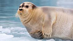 Canada's Arctic lies in the world's smallest ocean, the Arctic Ocean.