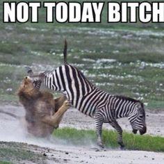 Zebra #winning!