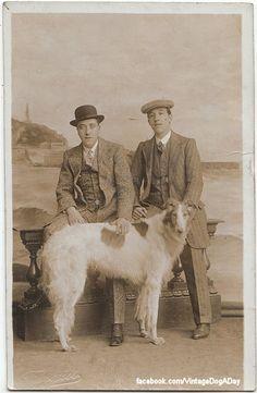 ❤ =^..^= ❤  vintagedogaday: Borzoi, 1911