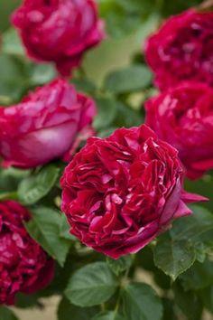 Resultado de imagen de rose eric tabarly