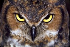 What makes owls deadly could make wind turbines silent | Grist