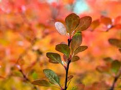 royalty free images free of charge - Google Search Photo Stock Images, Stock Photos, Free Photos, Royalty Free Images, Amazing Photography, Autumn, Fall, Plants, Color
