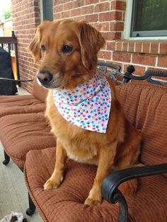 Rainbow paw print dog bandana by KonaWear on Etsy, $6.99. Modeled by Noodle the Golden Retriever.