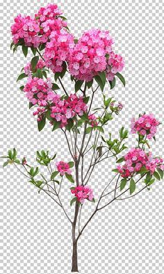This PNG image was uploaded on April pm by user: and is about Blossom, Branch, Bushes, Cut Flowers, Desktop Wallpaper. Photoshop Tree, Photoshop Images, Photoshop Plugins, Photoshop Overlays, Photoshop Design, Model Photoshop, Photoshop Elements, Wedding Background Images, Studio Background Images