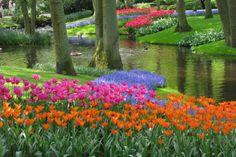 Des tulipes pour tous les printemps