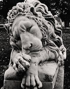 Etched in Deep Thought. Roman Sculpture, Lion Sculpture, Cemetery Angels, Cemetery Art, Statue Tattoo, Stone Lion, Animal Sculptures, Animal Statues, Lion Love