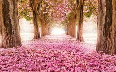 beautiful 20 Amazing Beautiful Tree Tunnels Landscapes Nature will always impress us, what is more beautiful than being in a tunnel of greenery! We have selected for you 20 amazing beautiful tree tunnels t.