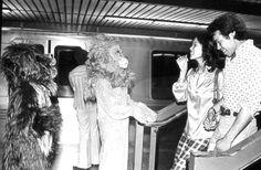 Lion greets passengers