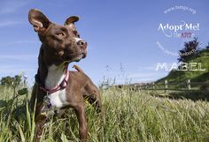 Mabel with Herd It Through The Grapevine Rescue, via Flickr.