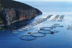 A research institute affiliated with Sea World is planning a large aquaculture farm to produce yellowtail outside of  California coastsl waters.  The big question is whether this is beneficial to wild stocks and the marine environment.