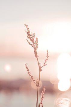 Radiance | Flickr - Photo Sharing!