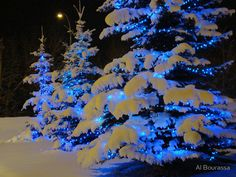 Growing up we always had blue lights on our house and big pine tree. It's so beautiful!