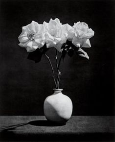 "the–elusive–muse: "" Robert Mapplethorpe, Pink Roses, "" Pink Roses, White Flowers, Beautiful Flowers, Simple Flowers, Beautiful Life, Richard Avedon, Flower Images, Flower Photos, Still Life Photography"
