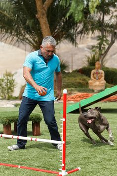 Junior and Dog Whisperer Cesar Millan training on the dog agility course. www.easyturf.com/cesarmillan l artificial turf l pet turf l backyard l outdoor living l synthetic grass l dog whisper l kid friendly l perfect for kids