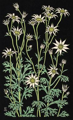 FLANNEL FLOWER III 49 X 30 CM    EDITION OF 50 Hand coloured linocut on handmade Japanese paper $850