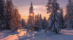 ***Sun in the cold snowy forest by Marat Akhmetvaleev (south Urals, Russia)