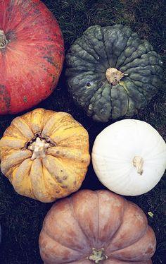 harvest . autumn . fall . pumpkins . colors . palette . inspiration
