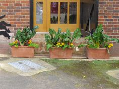 Indoor Garden Kent - Awesome Indoor Garden Kent , A Trio Of Terracotta Fresco Troughs Sit Near the Entrance to Indoor Garden, Garden Pots, Home And Garden, Evergreen Climbers, Clematis Armandii, Large Terracotta Pots, Kent Homes, Garden Images, Garden Supplies