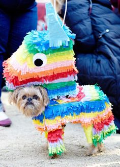 Rank The Cutest Dog Halloween Costumes Of All Time | Playbuzz