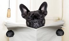 How To Stop Your Dog's Diarrhea Fast