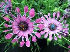 Resultado de imagen de flores tropicales exoticas