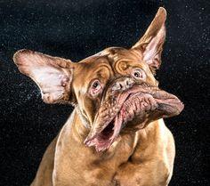 Hunde-Bilder: Zum Schütteln komisch