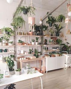 16+ idee di piante da interno minimaliste prodigiose