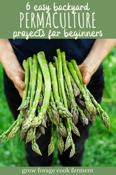 These six easy backyard permaculture projects for beginners will get you on your way to a mini permaculture paradise! #permaculture #gardening #spring #growforagecookferment