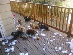 carnage...