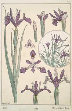 art nouveau iris design | Found on digitalgallery.nypl.org