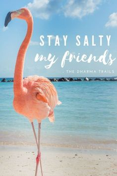 Quotes About the Ocean Short Beach Quotes, Summer Beach Quotes, Beach Quotes And Sayings, Happy Quotes, Beach Puns, Beach Humor, Heat Quotes, Paradise Quotes, Beach Captions
