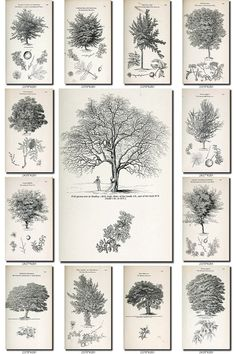 BOTANICAL-19-bw Collection of 307 black-and-white vintage images illustration TREES High resolution digital download printable pictures           data-share-from=listing        >           <span class=etsy-icon