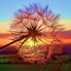 Close your Eyes & make a 'Wish...