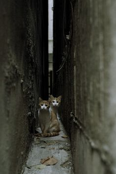 Brothers on a narrow path.