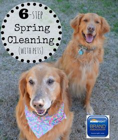Six-Step Spring Cleaning {With Pets} plus a giveaway