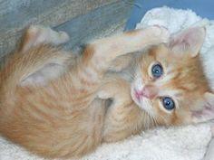Cute kee-kee (kitty)