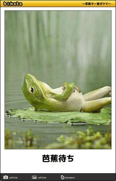 画像 : 暇つぶしに爆笑するっ?? 殿堂入り「ボケて」&名作「ボケて」 大全集[毎日更新中!!】 - NAVER まとめ