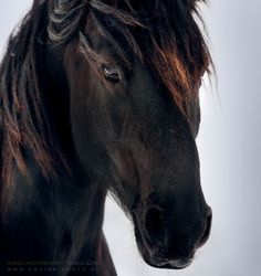 This looks just like the big horse that is in my dreams sometimes... Sometimes my 'black' car would turn into this horse...any dream readers out there?