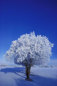 Search Snowy Tree In A Field Posters, Art Prints, and Canvas Wall Art. Barewalls provides art prints of over 33 Million images. Frames On Wall, Framed Wall Art, Wall Art Prints, Snowy Trees, Winter Trees, Irish Images, Nature Posters, Scenery, Landscape