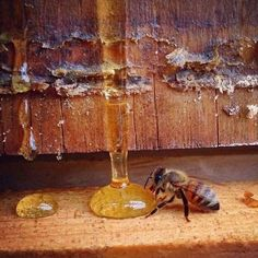 Information About Bees, Bee Removal, Bee Free, Bee Do, My Honey, Instagram Blog, Save The Bees, Bee Keeping, Wine Decanter