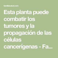 Esta planta puede combatir los tumores y la propagación de las células cancerígenas - FamiliaSalud.com