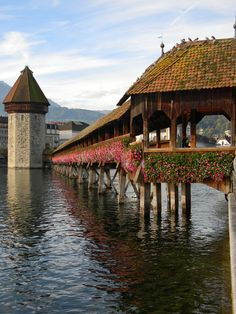 I remember walking this in Switzerland and seeing swans swimming in the water thinking it must be a dream