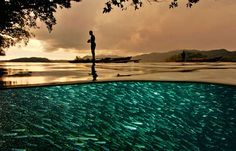 Raja Ampat, Indonesia by Davidi Doubilet, nature.org: A local fisherman stands on an outrigger above a school of flashing baitfish. #Indonesia #Raja_Ampat