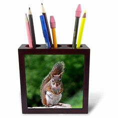 3dRose ph_22427_1 Red Squirrel with Attitude Tile Pen Holder 5Inch *** More info could be found at the image url.