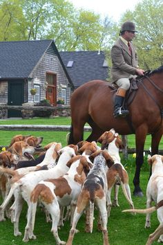 The Fox and the Hounds and horses....good feelings....exercise for the body, heart, mind and spirit...