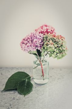 Hydrangea flower jar