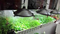 Make this indoor green house for only $15. Costs only $3 a month to run!