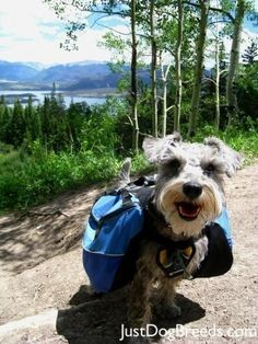 All you seem to do is work. | Community Post: These Mini Schnauzers Will Solve All Of Your Problems