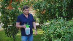 Адская смесь против садовых и огородных вредителей.jpg